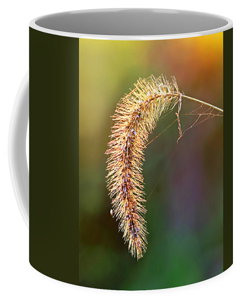 Backlit Seed Head In Fall Coffee Mug featuring the photograph Backlit Seed Head In Fall by Carolyn Derstine