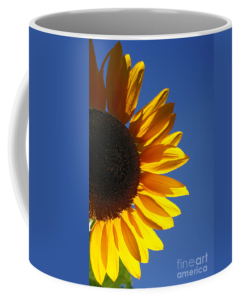 Back Light Coffee Mug featuring the photograph Backlit Sunflower by Gaspar Avila