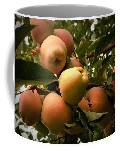 Apples Coffee Mug featuring the photograph Backyard Garden Series - Apples Cluster by Carol Groenen
