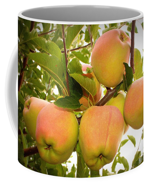 Fruits Coffee Mug featuring the photograph Backyard Garden Series - Apples In Apple Tree by Carol Groenen