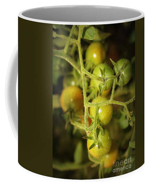 Cherry Tomatoes Coffee Mug featuring the photograph Backyard Garden Series - Green Cherry Tomatoes by Carol Groenen