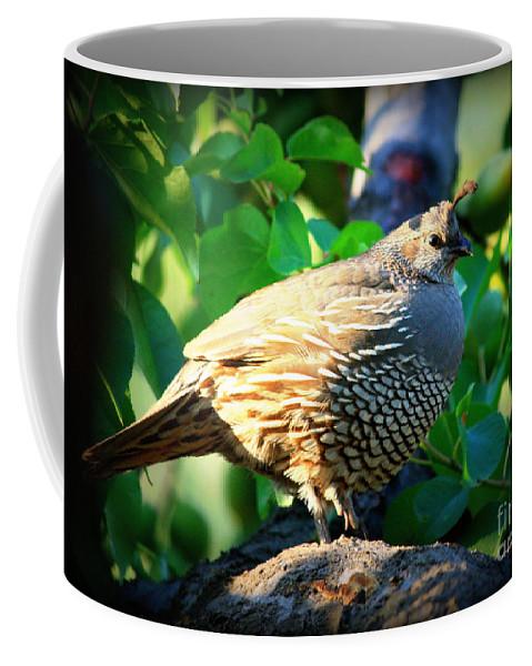 Backyard Garden Coffee Mug featuring the photograph Backyard Garden Series - Quail In A Pear Tree by Carol Groenen