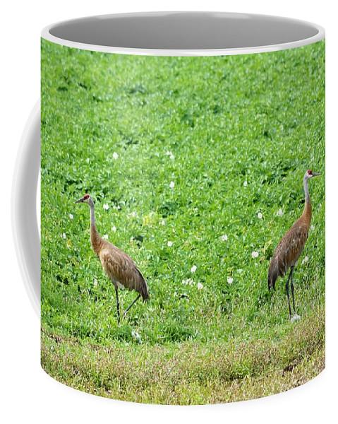 Sandhill Crane Coffee Mug featuring the photograph Balance And Majesty by Kimberly Woyak