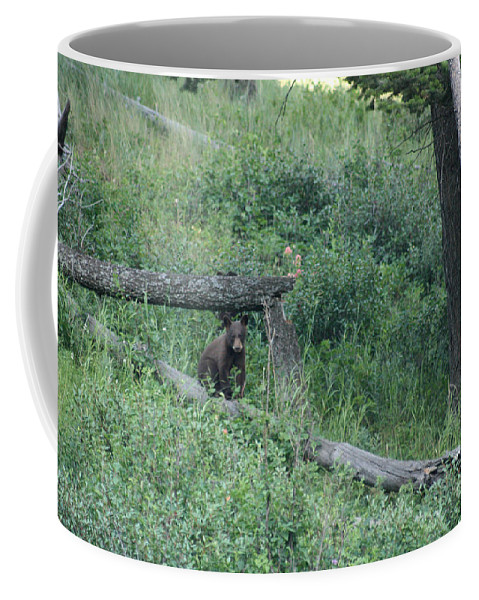 Animal Coffee Mug featuring the photograph Balance Beam by Mary Mikawoz
