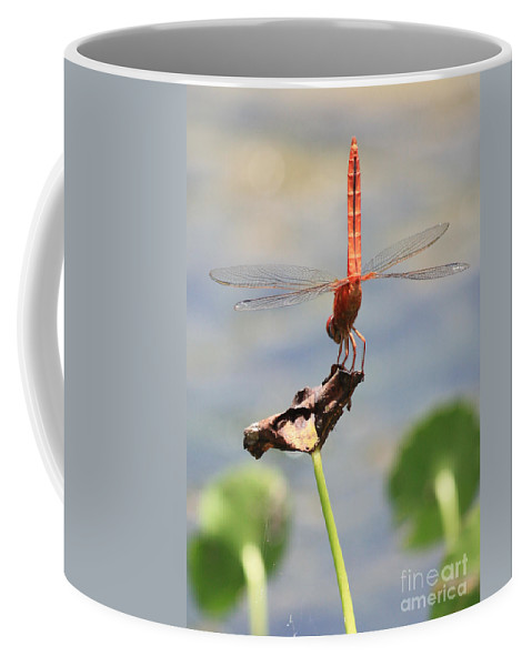 Red Dragonfly Coffee Mug featuring the photograph Balancing Act by Carol Groenen