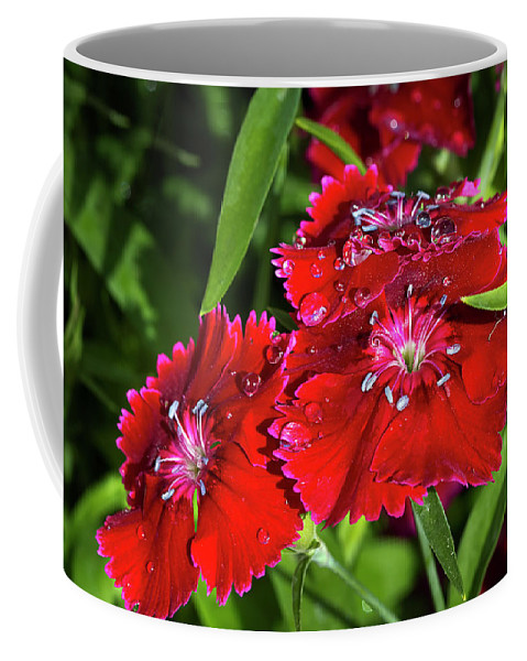 Dianthus Coffee Mug featuring the photograph Balancing Raindrops by Phyllis Denton