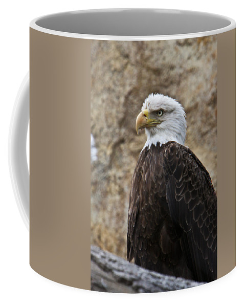 Bald Coffee Mug featuring the photograph Bald Eagle - Portrait 2 by Douglas Barnett