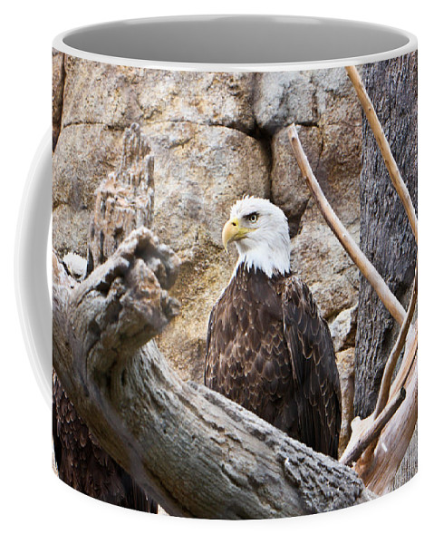 Bald Coffee Mug featuring the photograph Bald Eagle - Portrait by Douglas Barnett