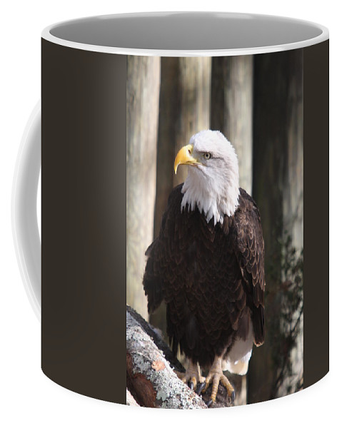 Eagle Coffee Mug featuring the photograph Bald Eagle by Christiane Schulze Art And Photography