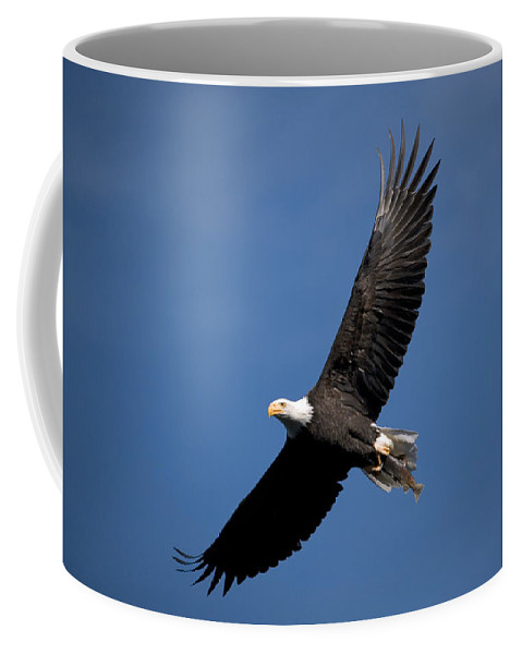 Bald Eagle Coffee Mug featuring the photograph Bald Eagle I by Randall Ingalls