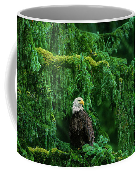 Bald Eagle Coffee Mug featuring the photograph Bald Eagle In Temperate Rainforest Alaska Endangered Species by Dave Welling