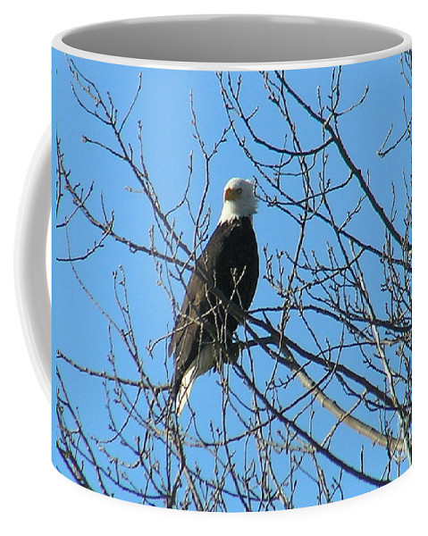 Bald Coffee Mug featuring the photograph Bald Eagle by Louise Magno
