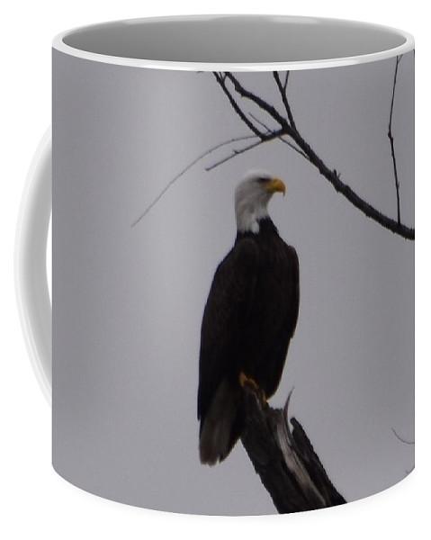 Bald Eagle Coffee Mug featuring the photograph Bald Eagle 2 by Linda Benoit