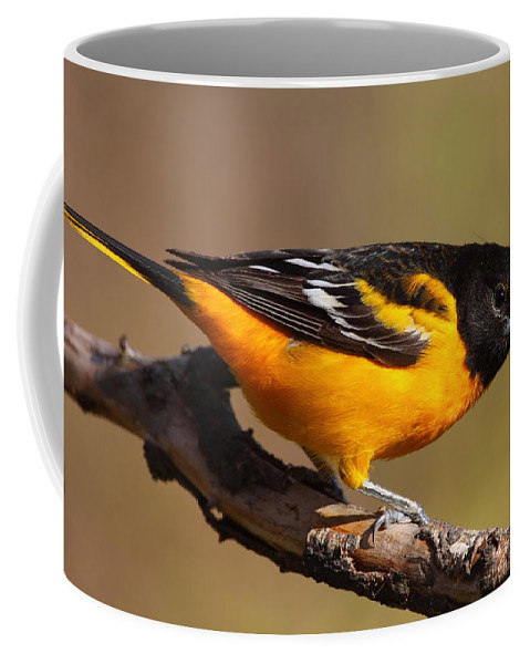 Baltimore Coffee Mug featuring the photograph Baltimore Oriole by Bruce J Robinson