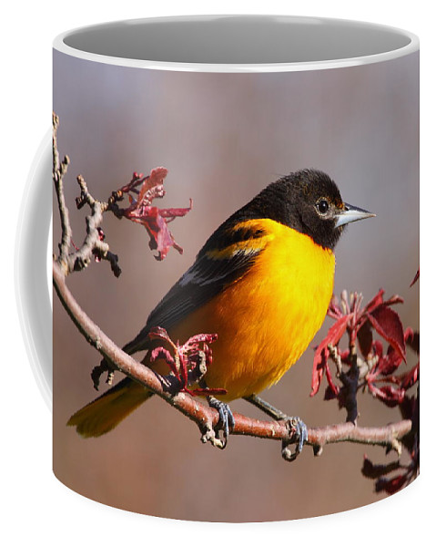 Baltimore Oriole Coffee Mug featuring the photograph Baltimore Oriole In Crabapple by Bruce J Robinson