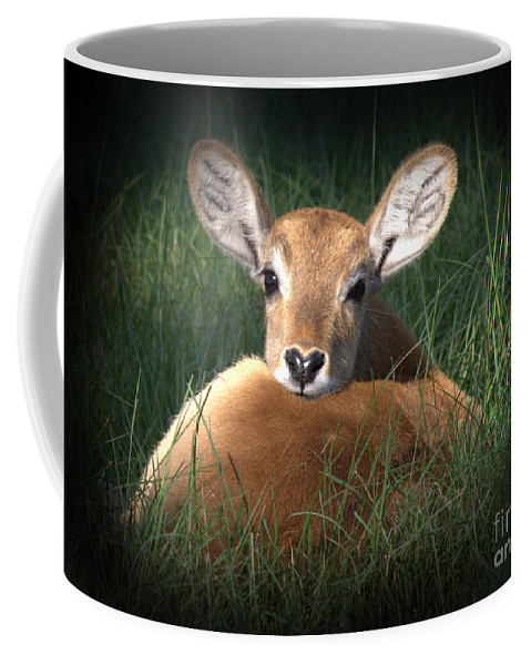 Fawn Coffee Mug featuring the photograph Bambi by Kim Henderson