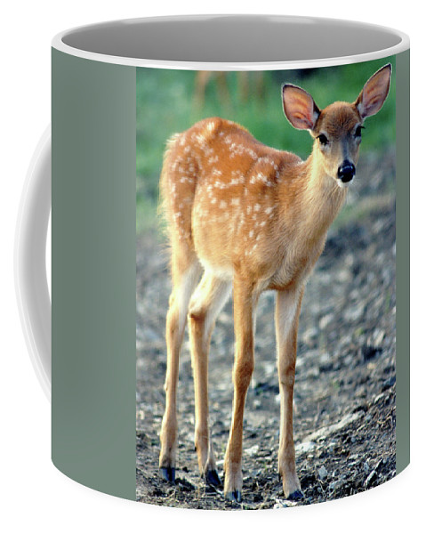 Faunagraphs Coffee Mug featuring the photograph Bambi2 by Torie Tiffany
