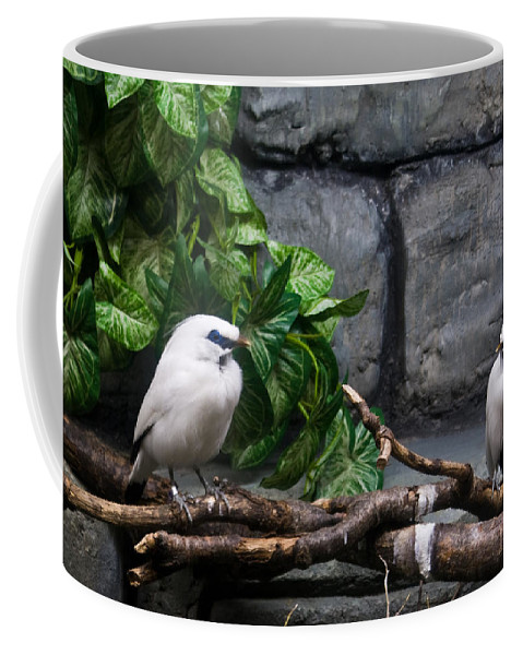 Bandit Coffee Mug featuring the photograph Bandit Birds by Douglas Barnett