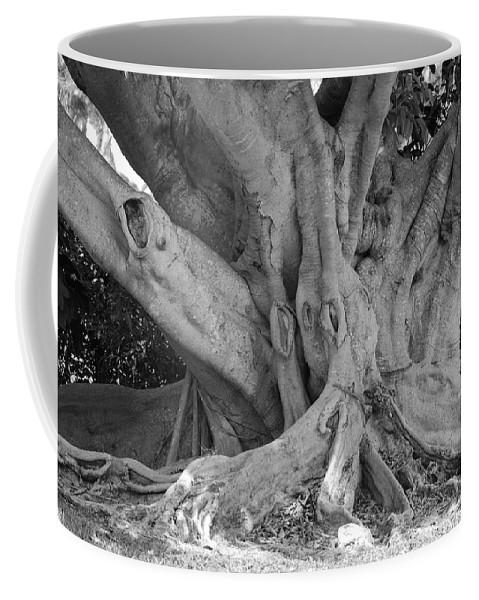 Tree Coffee Mug featuring the photograph Banyan Tree by Rob Hans