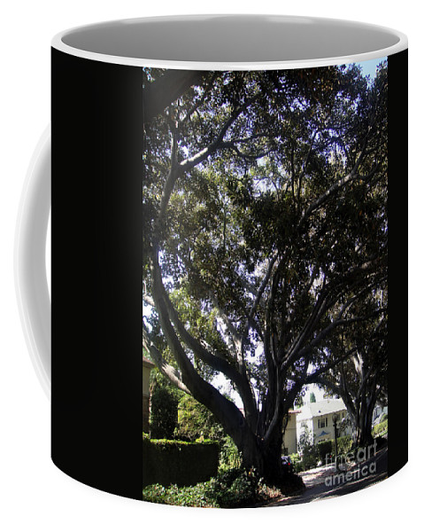 Adansonia Coffee Mug featuring the photograph Baobab Trees In Los Angeles by Sofia Metal Queen