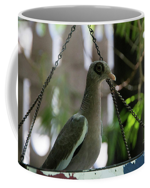 Pigepn Coffee Mug featuring the photograph Bare Eyed Pigeon by Adriana Zoon