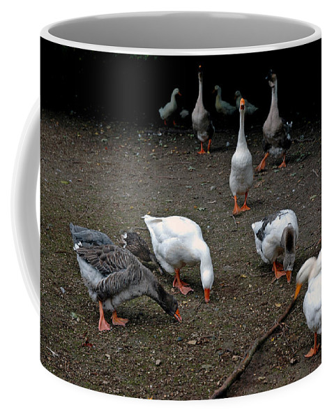 Usa Coffee Mug featuring the photograph Barn Yard Quackers by LeeAnn McLaneGoetz McLaneGoetzStudioLLCcom