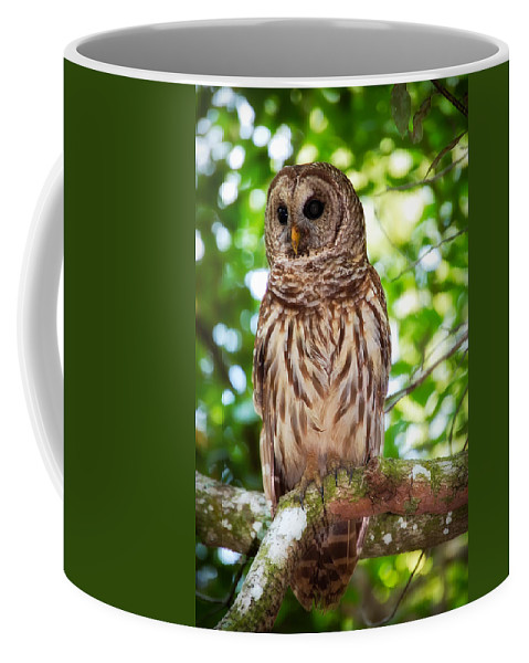 Animal Coffee Mug featuring the photograph Barred Owl by Rich Leighton
