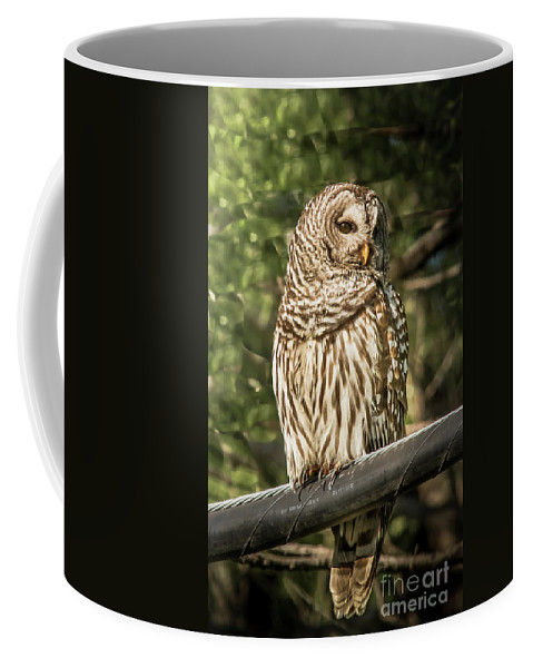 Nature Coffee Mug featuring the photograph Barred Owl by Robert Frederick