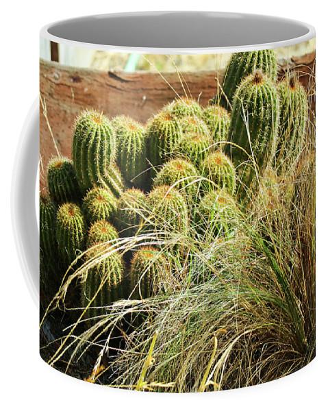 Barrel-cacti Coffee Mug featuring the photograph Barrel Cacti by Joyce Dickens