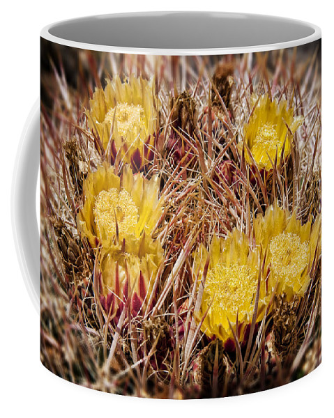 Barrel Cactus Coffee Mug featuring the photograph Barrel Cactus Flowers 2 by Kelley King
