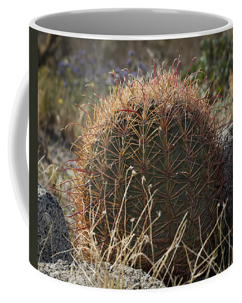 Barrel Cactus Coffee Mug featuring the photograph Barrel Cactus by Kelley King