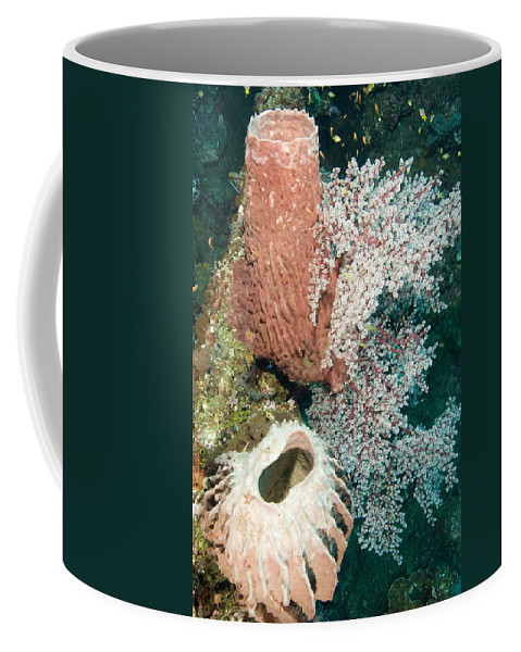 Coral Coffee Mug featuring the photograph Barrell Sponges And Sea Fans by Tim Laman