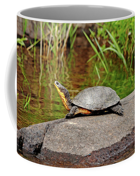Blanding's Turtle Coffee Mug featuring the photograph Basking Blanding's Turtle by Debbie Oppermann