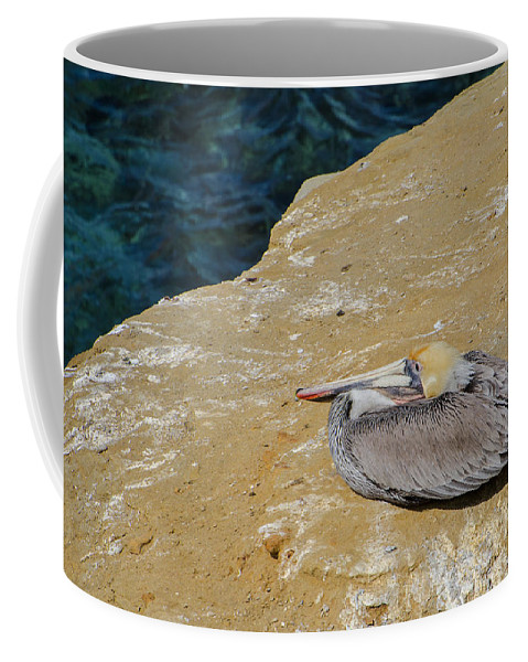 Basking In The Sun Coffee Mug featuring the photograph Basking In The Sun by Susan McMenamin