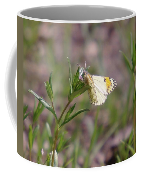 Moths Coffee Mug featuring the photograph Basking In The Warmth by Jeff Swan