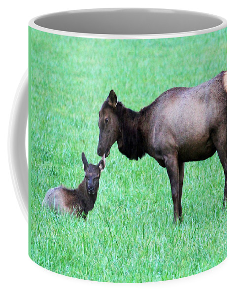 Elk Coffee Mug featuring the photograph Elk's Bath Time by Jennifer Robin