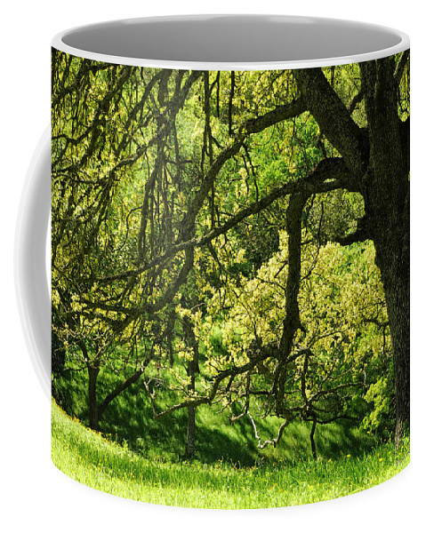 Oak Tree Coffee Mug featuring the photograph Bathed In Spring by Donna Blackhall