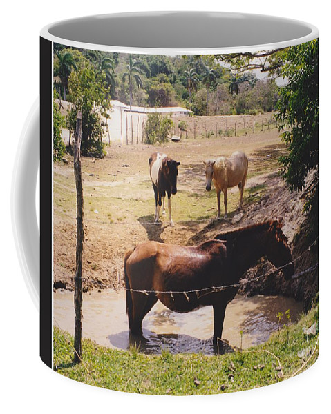 Horses Coffee Mug featuring the photograph Bathing Horse by Michelle Powell