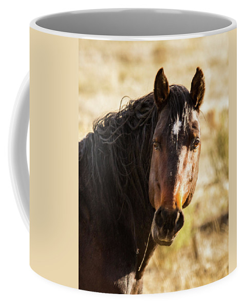 2018 Coffee Mug featuring the photograph Bay Stallion Of Piceance Basin by Debbie Rudd