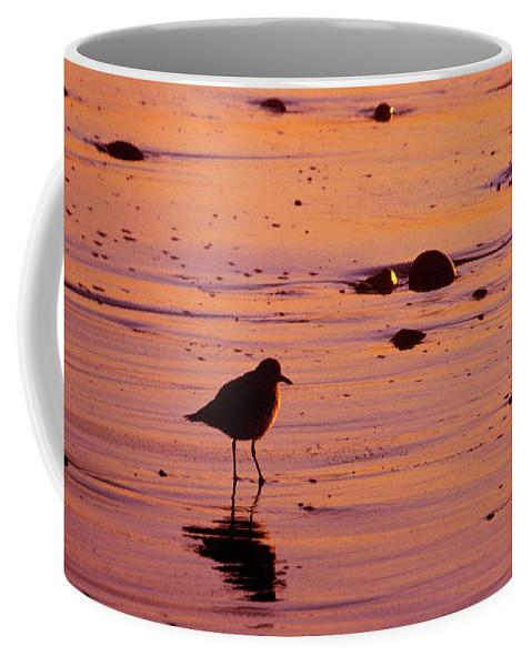 Bird Coffee Mug featuring the photograph Beach Bum by Jerry McElroy