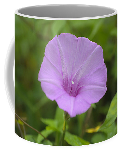 Flower Coffee Mug featuring the photograph Beach Morning Glory by Kenneth Albin