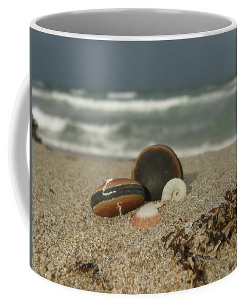 Sea Bean Coffee Mug featuring the photograph Beach Treasures 1 by Kimberly Mohlenhoff