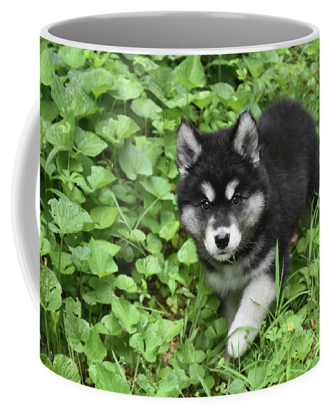 Alusky Coffee Mug featuring the photograph Beautiful Alusky Puppy Peaking Out Of Green Foliage by DejaVu Designs