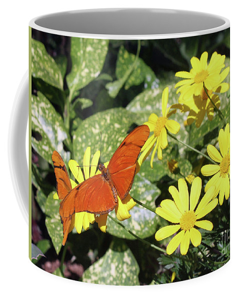 Butterflies Coffee Mug featuring the photograph Beautiful Butterflies by Kelly Holm