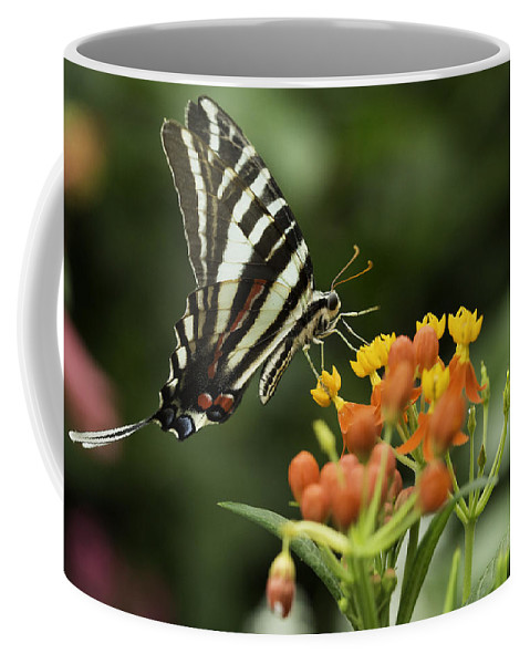 Butterfly Coffee Mug featuring the photograph Beautiful Butterfly Waving by Billy Bateman