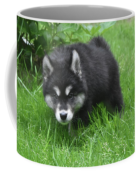 Alusky Coffee Mug featuring the photograph Beautiful Face Of A Black And White Alusky Puppy by DejaVu Designs