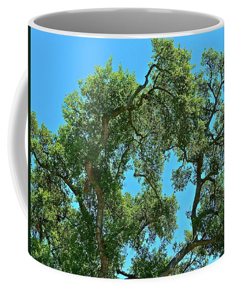 Tree Coffee Mug featuring the photograph Beautiful Oak by Diana Hatcher