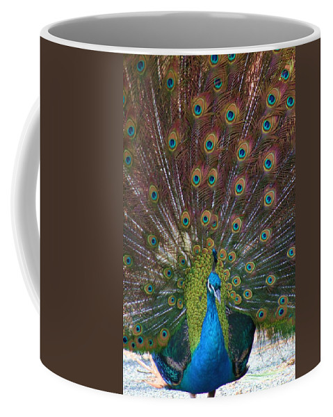 Peacock Coffee Mug featuring the photograph Beautiful Peacock by Tina Meador