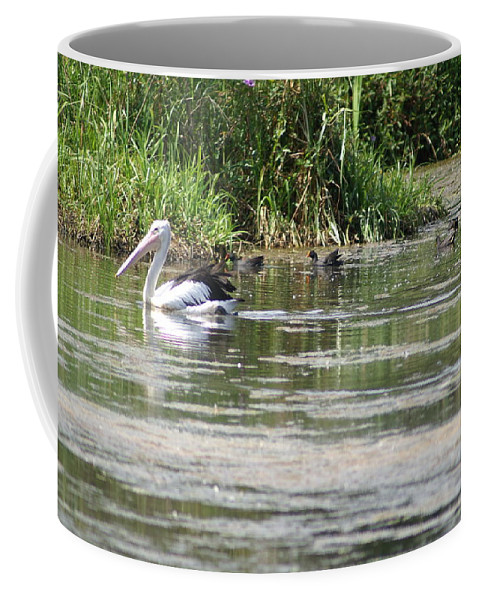 Pelican Coffee Mug featuring the photograph Beautiful Pelican by Brian Leverton