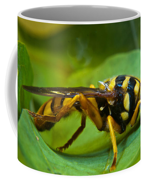 Beautiful Coffee Mug featuring the photograph Beautiful Syrphid by Douglas Barnett